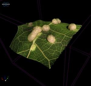 1115 iom_leaf_tumors_23um_3D_Color