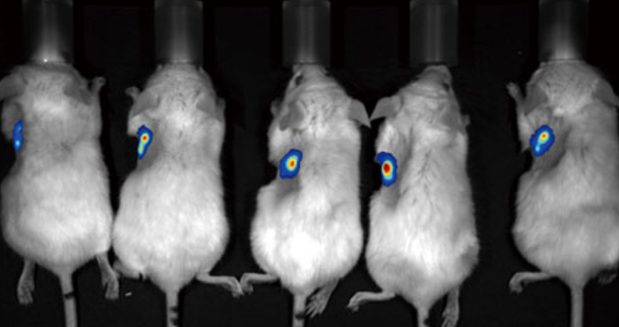 Imaging of five mice simultaneously at 1.5x zoom (FOV:21cm x 16cm)